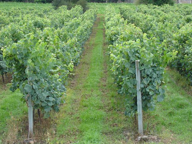Wine of the year (so far): California Girl goes Portuguese